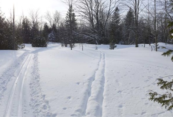 cross-country ski trails diverging