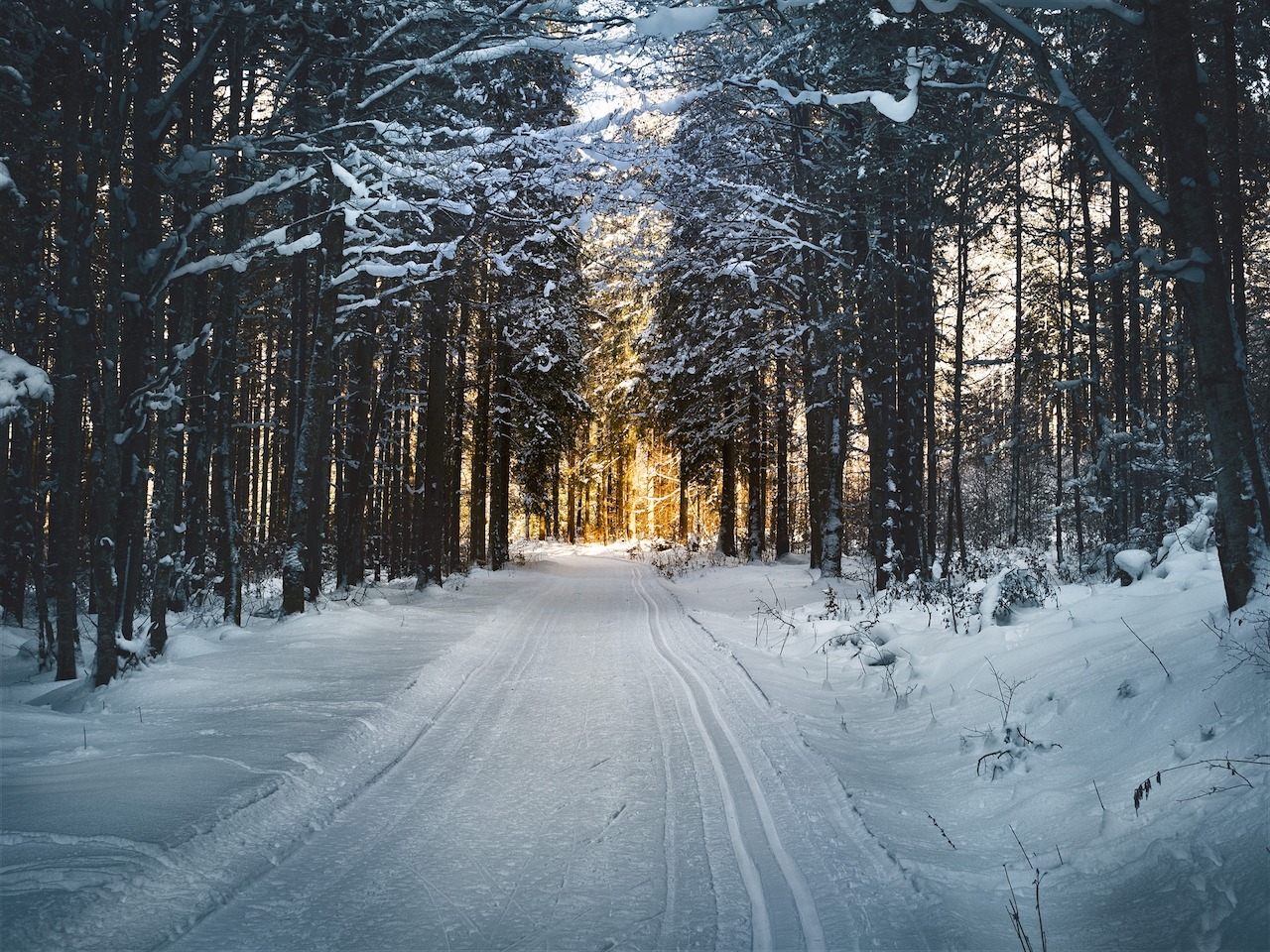 cross-country skiing in the forest