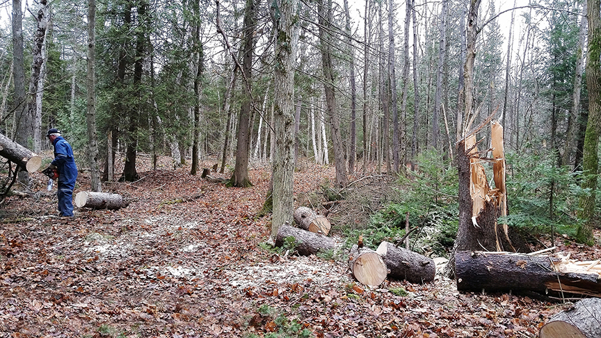 Colpoys Ski Trail - tree clearing
