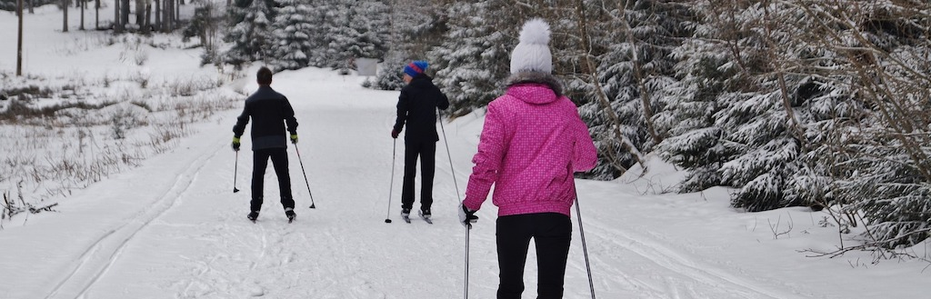 cross-country skiers on forest trail