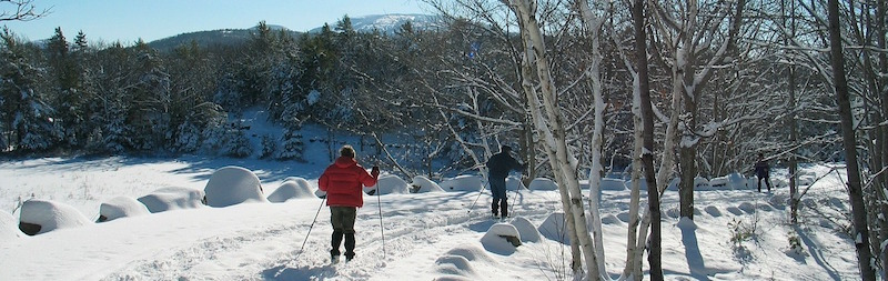 People cross-country skiing in Acadia National Park